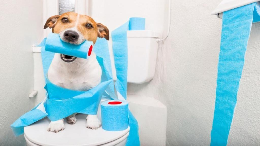 آموزش سگ برای دستشویی