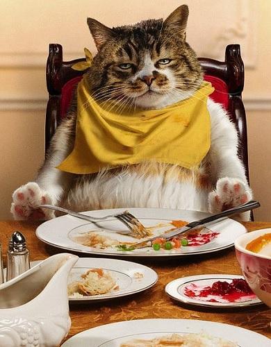 خرید غذای گربه
