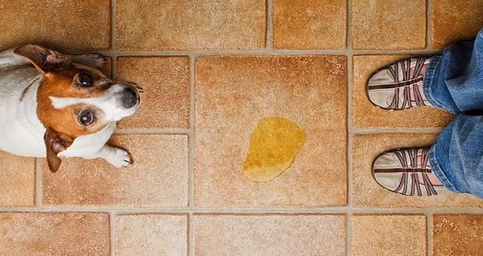 شستن سگ بعد از دستشویی