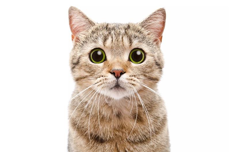 علائم پریود در گربهها به چه شکل است