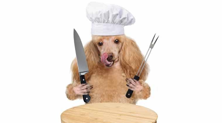 طرز تهیه غذای خشک برای سگ