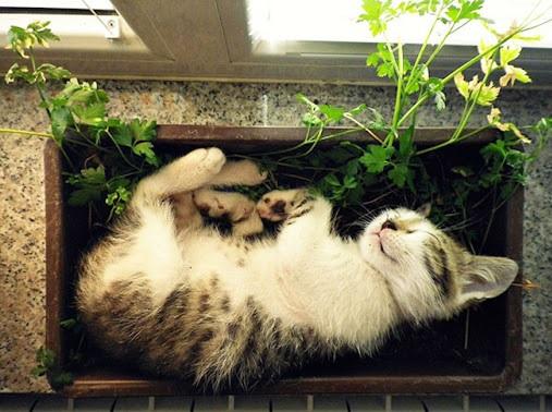 به نظر نمیرسد خاک باغچه جایگزین مناسبی برای خاک گربه باشد.