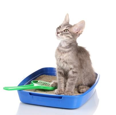 برای تعویض خاک گربه حتما اصول بهداشتی را رعایت کنید.