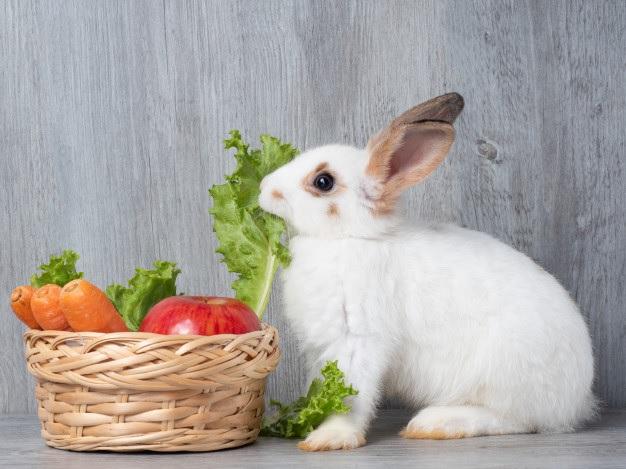 سبزی یک غذای مناسب برای خرگوش است