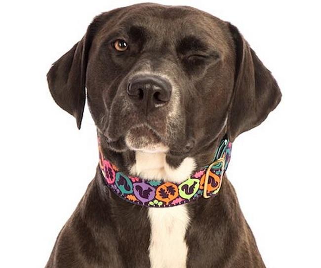 بر روی قلاده سگ اطلاعات سگ وجود دارد