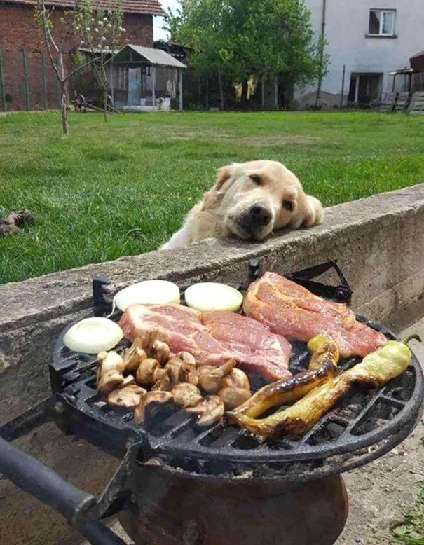 گوشت خام در لیست غذاهای ممنوعه برای سگ
