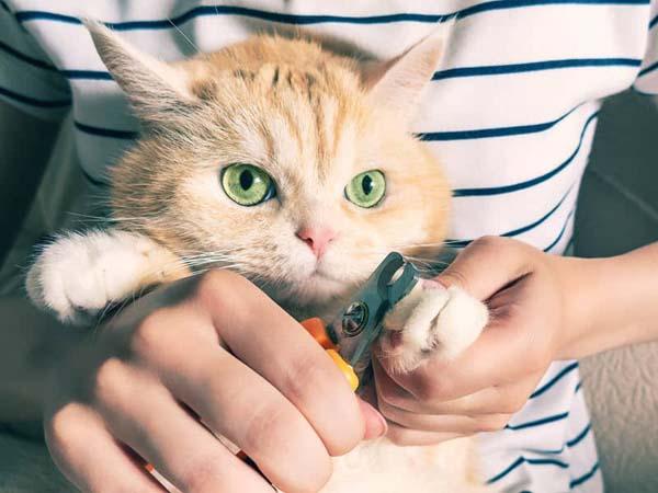 کوتاه کردن ناخن گربه