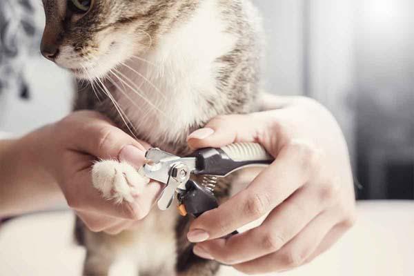 آرامش گربهها در زمان کوتاه کردن ناخن