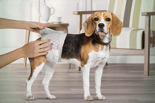 پوشک سگ برای آموزش او جهت حفظ نظافت