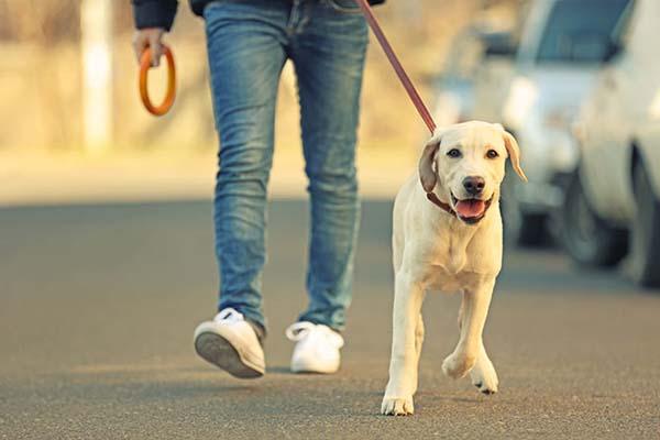 دلایلی چاقی در سگ ها