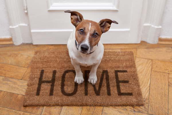 راهکارهای تنها ماندن سگ در خانه