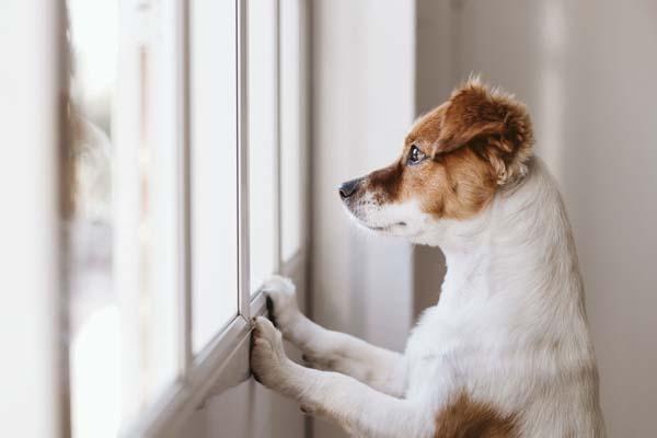تنها گذاشتن سگ در خانه
