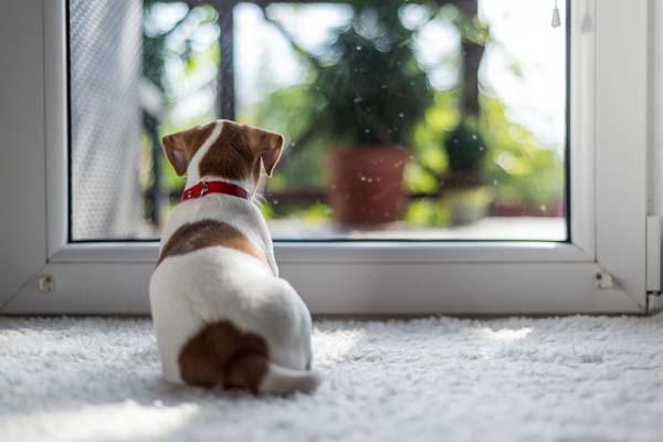 سگها در باغ باید کمتر تنها باشند.