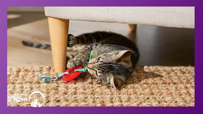 تمایل به جویدن اشیاء در دسترس در زمان رشد دندان شیری گربه ها