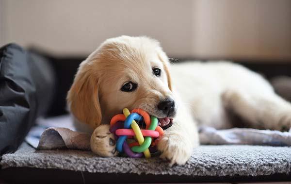 سگها را با بازی مشغول کنید.