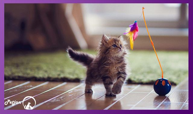 بازی گربه با قندگ