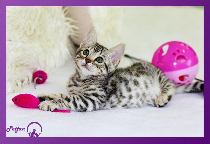اسباب بازی گربه یک دنیا شور و نشاط به همراه خود دارد.