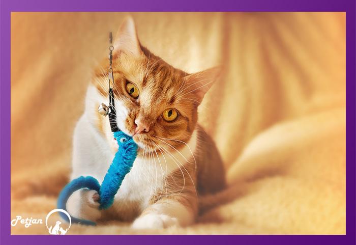 گربهها ضمن بازی، روحیه جنگجویی خودشان را حفظ میکنند.