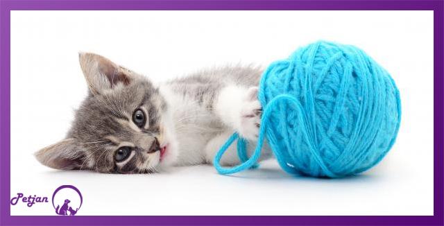 اسباب بازی کاموایی گربه